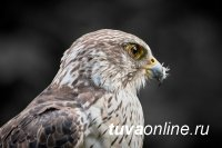 В России хищные птицы гибнут из-за изменений климата