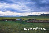 Волчья стая напала на отару овец на чабанской стоянке в Туве