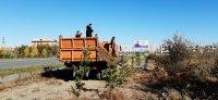 В Кызыле прибавилось 205 деревьев и 240 кустарников