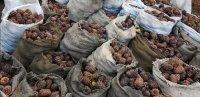 Заблудившихся в тайге сборщиков орехов в Туве помогла разыскать полиция