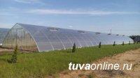В Туве создадут комплексное тепличное хозяйство