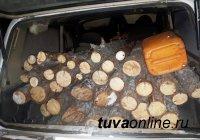 В Туве с 7 до 4,8 миллиона рублей снижен ущерб от незаконной рубки леса