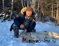Глава Тувы Шолбан Кара-оол побывал в облавной охоте на волка