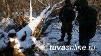В Туве задержан житель, хранивший запасы марихуаны в лесной чаще
