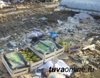 В Кызыле уничтожили польские груши, запрещенные к ввозу в Россию