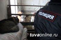В Туве в рамках операции «Кыштаг» сводят к минимуму скотокрадство и теневую преступность