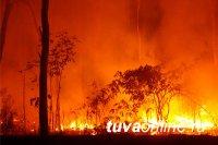 Тува в числе регионов, где в этом году лесные пожары будут ранними