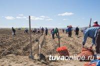 Тува: В День Победы 54 многодетные малоимущие семьи Кызыла посадили картофель