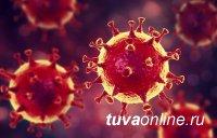В Туве за последние сутки COVID-19 выявили у 17 человек