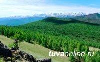 В Туве реализуется федеральный проект «Сохранение лесов»