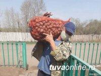 Власти Тувы помогли обеспечить семенным фондом более 3000 семей для посадки овощных культур и картофеля
