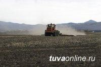 В Туве зерновыми засеяли 10778 га, наибольший объем - в Тандинском кожууне (4811 га)