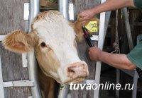 В Пий-Хемском районе Тувы оцифровывают скот