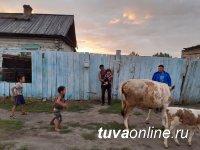 В Туве участник проекта «Корова-кормилица» подарил скот односельчанам