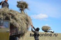 Сенокос-2020: по качеству и питательности кормов лидирует Тандинский район Тувы