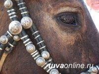 Всероссийский институт коневодства исследует геном тувинской лошади
