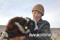 НААДЫМ: В Туве разработана концепция сохранения генофонда животных местных пород