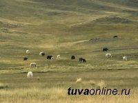 Тува: В Монгун-Тайге с 19 сентября вводятся ограничения в связи с COVID-19