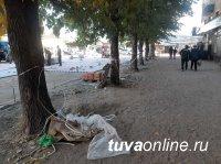 """Тува. Фотокамера в """"засаде"""" поймала кызылчан, выбрасывающих свой мусор на улицу!"""
