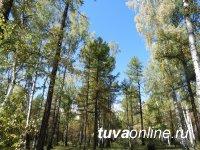 В Туве проведена актуализация реестров государственного лесопатологического мониторинга