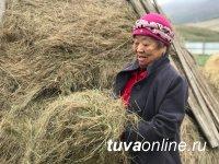 В Туве заготовили на зиму корма для сельхозживотных с превышением плана