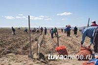 В Туве домохозяйства получили урожай овощей на 600 млн рублей