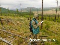 Сведения по тувинскому лесу актуализированы в государственном лесном реестре