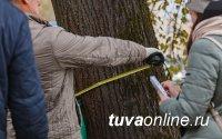 Лаборатория «Дендроэкологии и археологии» ТувГУ приобрела новое современное оборудование для исследований лесных экосистем