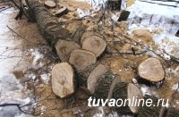 В Туве, заготавливая дрова, погиб школьник
