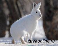 В Туве 15 декабря по республике ожидают холодный ветер