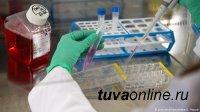 В Туве наименьшие темпы прироста случаев СOVID-19 за сутки
