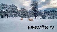 В Туве 28 января температура местами поднимется до – 5°С
