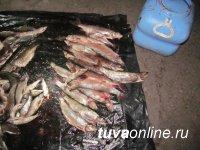 В Туве будут судить браконьеров, незаконно выловивших рыбу на озере в Туве