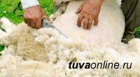 Минсельхоз Тувы предлагает удвоить инвестиции в проект по производству шерсти