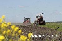 В Кызылском районе Тувы планируют засеять 2622 га селькохозяйственных угодий