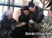 Студенты ТувГУ помогли чабанам республики получить и сохранить молодняк