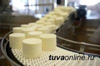 В Туве в 2022 году планируют создать сеть сыроваренных производств