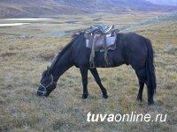Оперативники Тувы раскрыли кражу скота пятилетней давности