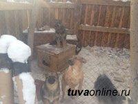 В восточной части Кызыла будет создан приют для бездомных животных