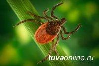 В Туве зафиксирован первый в этом году случай заболевания клещевым энцефалитом