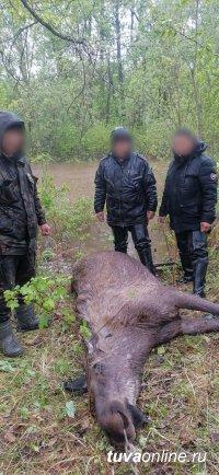В Улуг-Хемском районе Тувы задержаны браконьеры с тушей лося