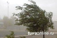 В Туве снова ожидаются сильные дожди и ветер