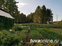 В Тоджинском кожууне Тувы по инициативе местных депутатов будут развивать огородничество