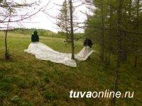 В Туве отмечено сокращение площади очага сибирского шелкопряда