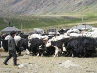 Тува, объем продукции в животноводстве которой превысил 5 млрд. рублей, сделает акцент на развитие сельского хозяйства