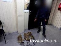 Житель Тувы незаконно охотился на сурков, занесенных в Красную книгу