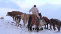 В Туве 523 семьи кыштаговцев создали фермерские хозяйства, которые произвели сельскохозпродукцию на 181,6 млн рублей
