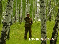 Центр защиты леса Тувы провел за полугодие наблюдения за состоянием лесов на площади 223 тыс га