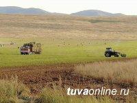 Посевные площади основных сельскохозяйственных культур в Туве увеличились