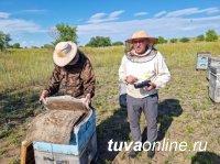 Предприятие «ВАВИОЛ» ведет договорную компанию с пасечниками Тувы
